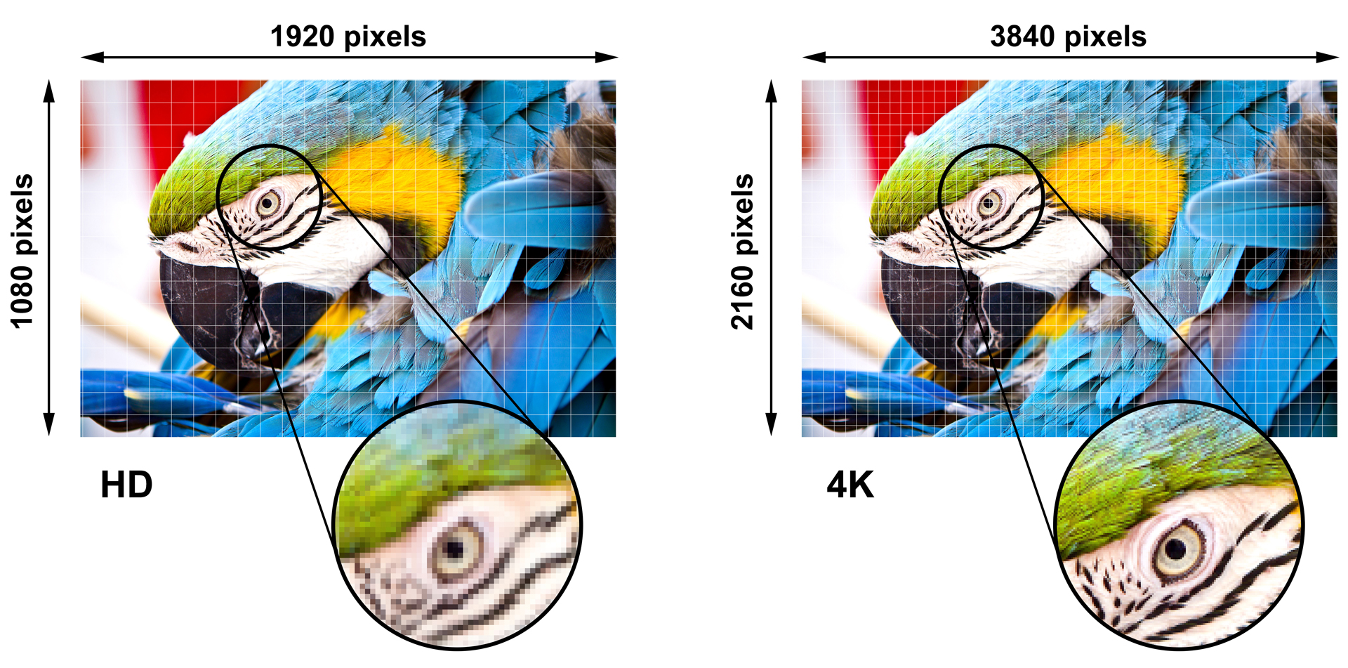 4k Uhd Technology Applications Across Vertical Markets