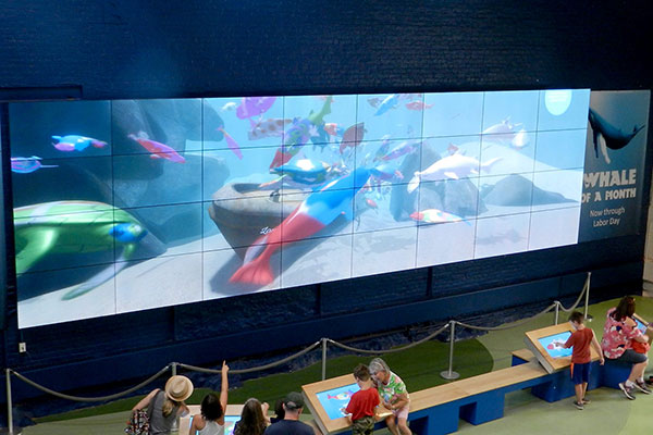 Maritime Aquarium video wall